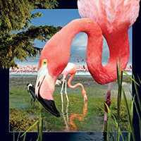 4D Video Card Flamingo