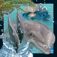 4D Video Card Dolphin