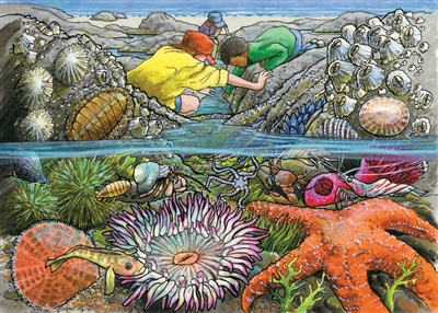 35pc Exploring the Seashore Tray jigsaw puzzle | Cobble Hill Puzzle Company