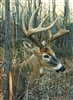 1000pc White-tailed Deer jigsaw puzzle | 80134 | Cobble Hill Puzzle Co