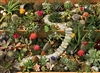 1000pc Succulent Garden jigsaw puzzle | 80157 | Cobble Hill Puzzle Co