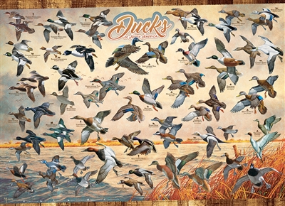 Ducks of North America 1000pc jigsaw puzzle by Cobble Hill Puzzle Co.