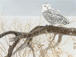 500pc Fallen Willow Snowy Owl jigsaw puzzle | Cobble Hill Puzzle Company