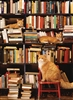 Gotham Bookstore Cats 500pc jigsaw puzzle by Cobble Hill Puzzle Co.