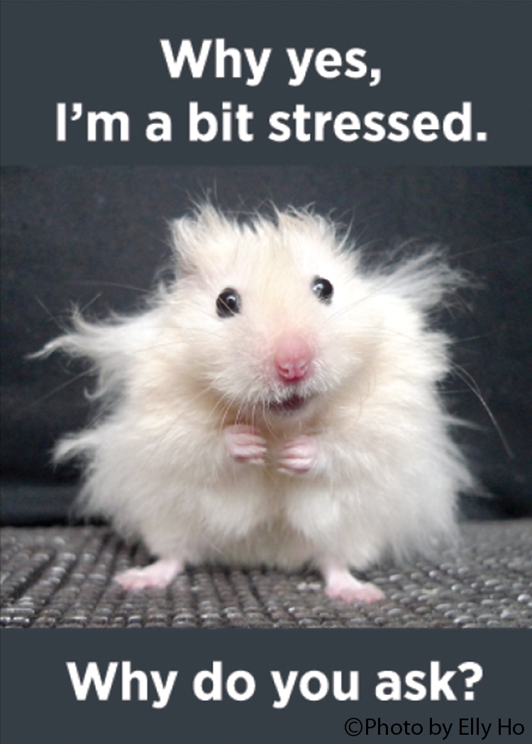 Why yes, I'm a bit stressed. Why do you ask?