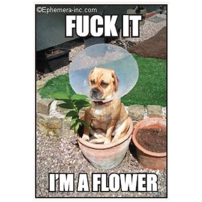 Fuck It, I'm a Flower