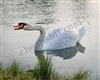 White Swan with chip