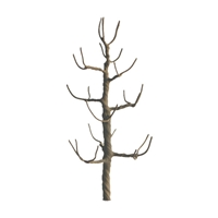 "0594116 PROFESSIONAL TREES: SYCAMORE 1.5"" PRO ARMATURE, 6/pk"