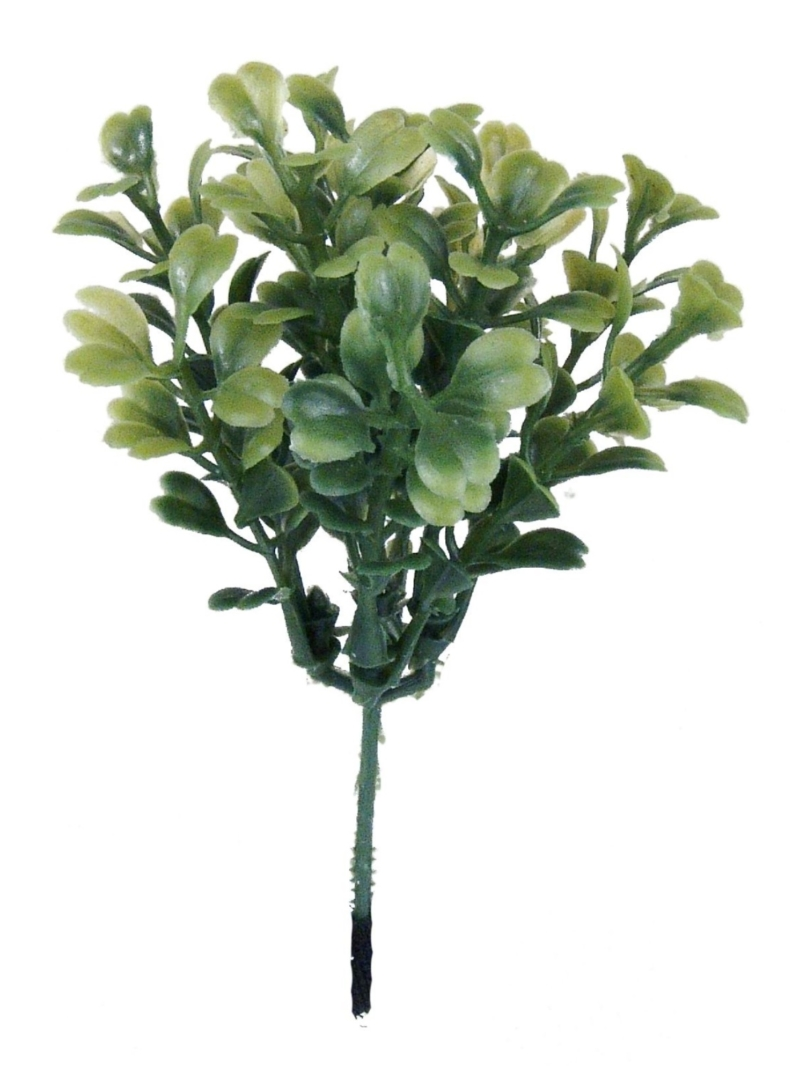 BOXWOOD PICK X10 - GREEN