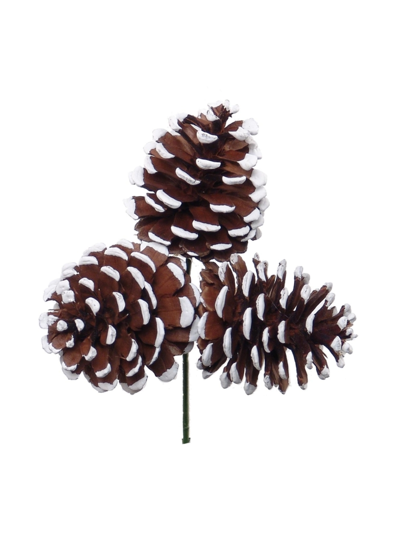"2.5""PINE CONE PICKx3/WHTP W/ WHITE TIPS - NATURAL"