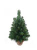 "24"" NORTHERN SPRUCE TREE IN BURLAP 81 TIPS"