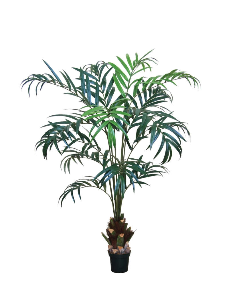 7' KENTIA PALM X16 W/POT PLASTIC POT - GREEN