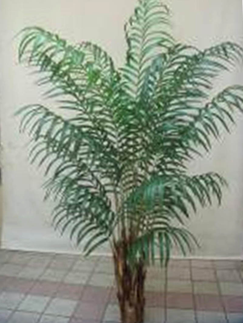6' ARECA PALM X19 W/POT KNOCK DOWN - GREEN