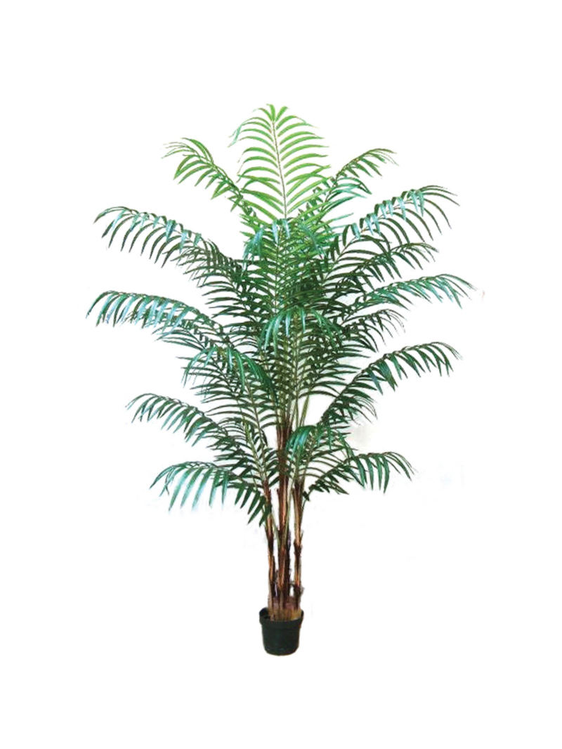 7' ARECA PALM X22 W/POT KNOCK DOWN - GREEN