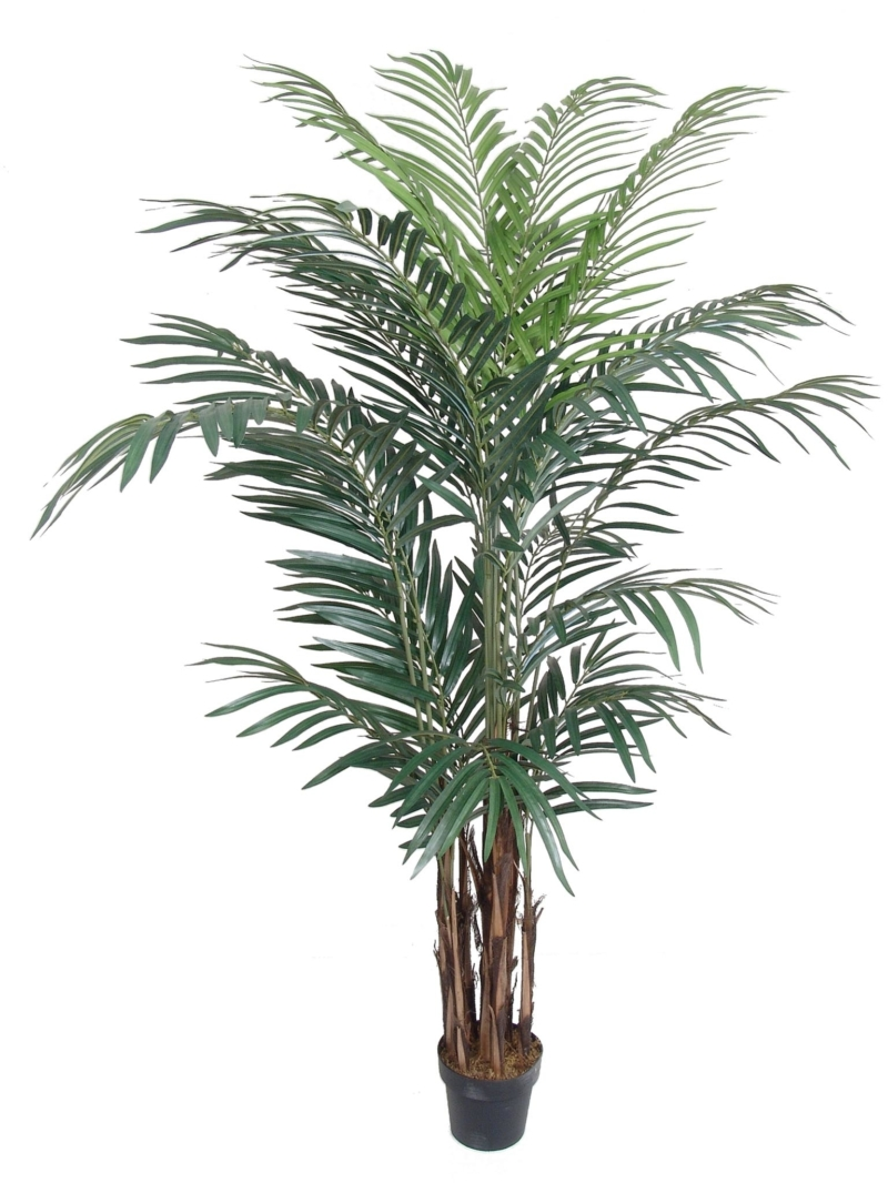8' ARECA PALM X24 W/POT KNOCK DOWN