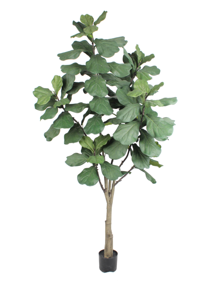 7'FIDDLE TREE W/89LVS/POT