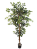 6' FICUS TREE X3/1512LVS - GREEN