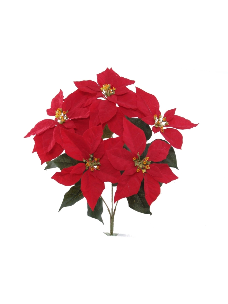 "20"" POINSETTIA BUSH X5"