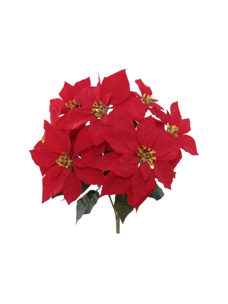 "20"" RED POINSETTIA BUSH X 7"