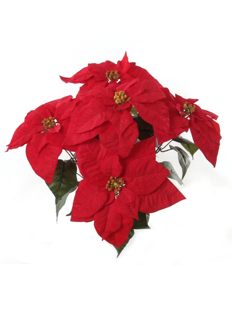"20"" VELVET POINS BUSH X5 - RED"