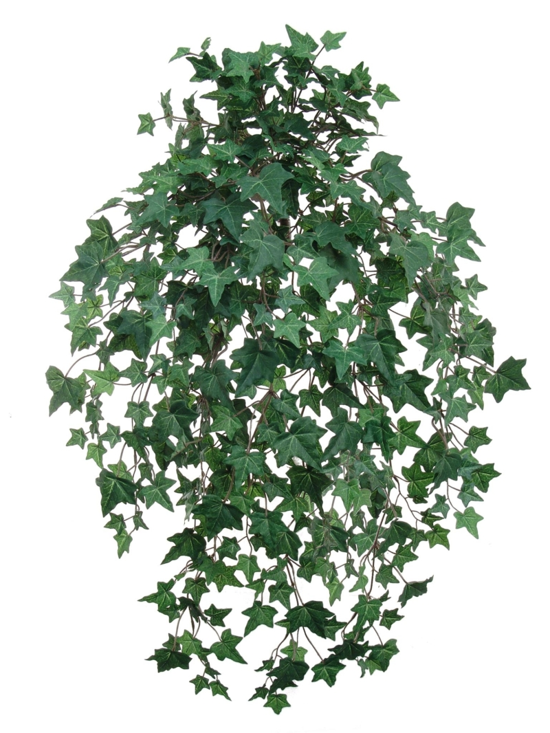 "33"" ENG IVY BUSH W/530LVS X15 - GREEN"