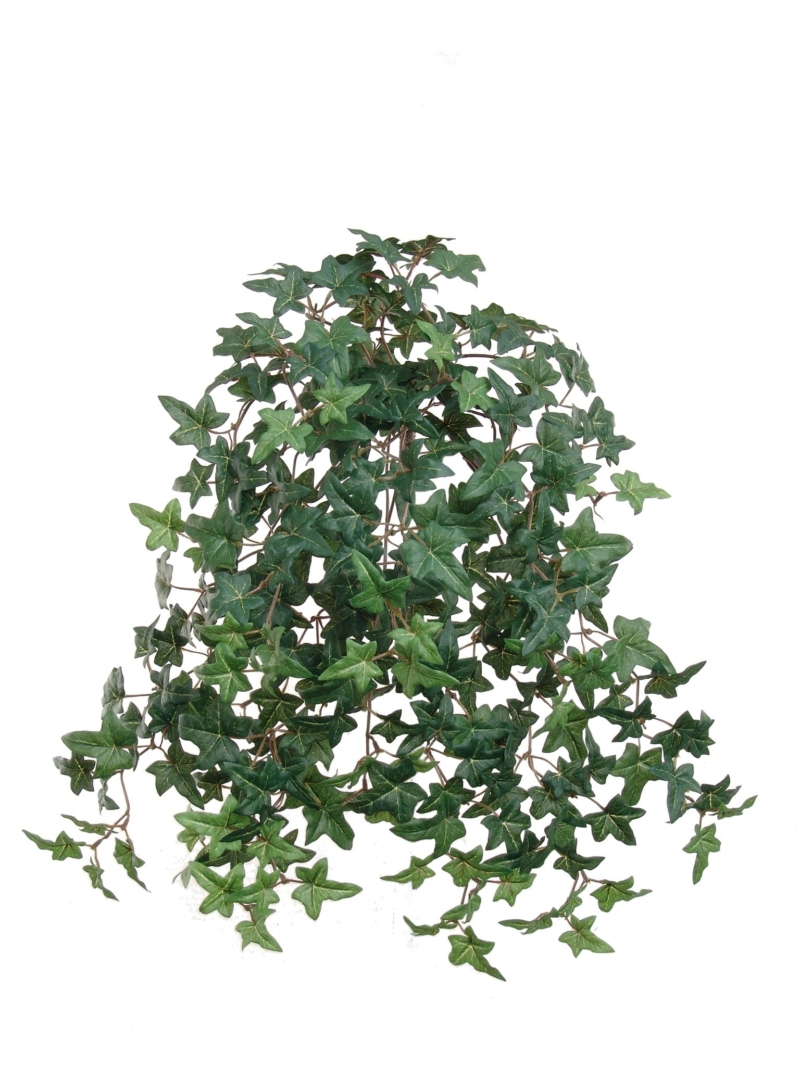 "20""MINI ENG IVY BUSH/274L X12, W/274LVS"