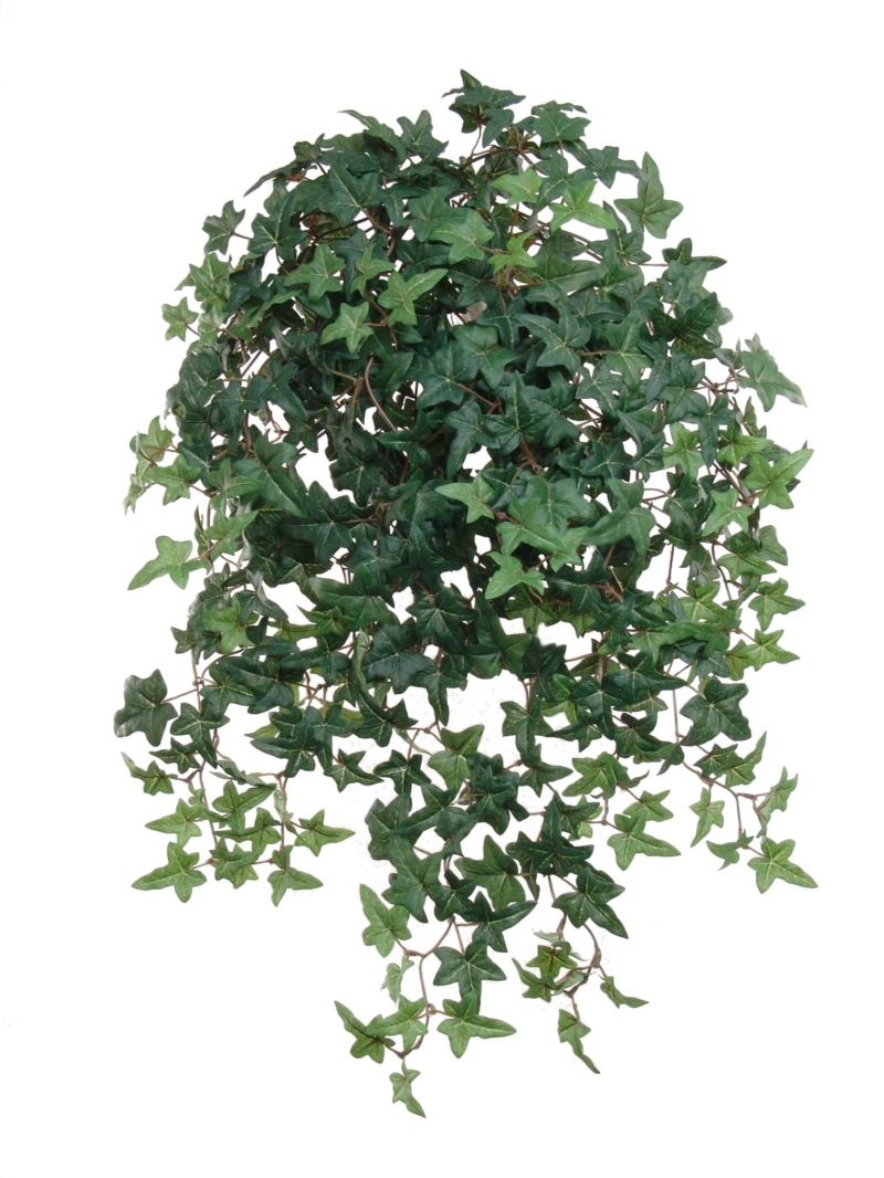 "26""MINI ENG IVY BUSH/450L X14, W/450LVS"