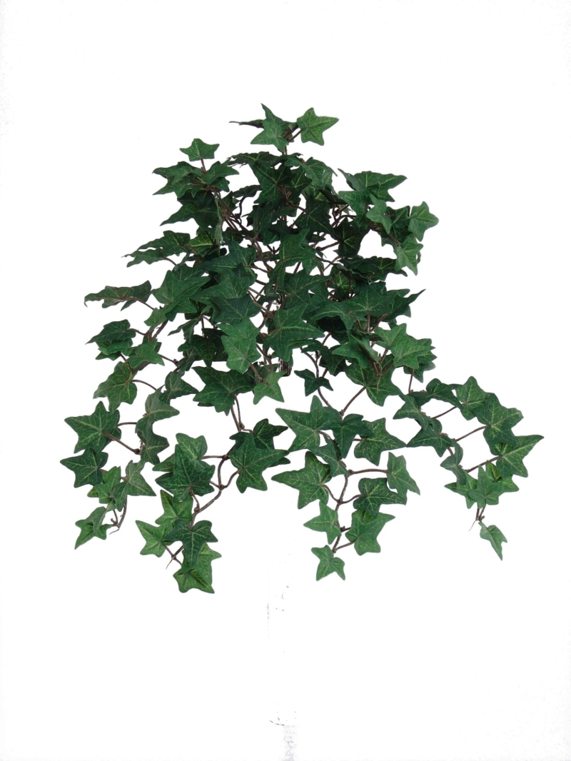 "13""MINI ENG IVY BUSH/176L W/176LVS"