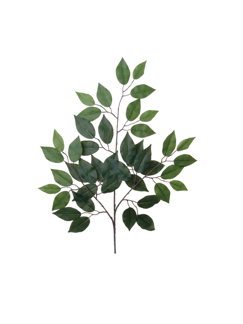 "24"" FICUS SPRAY X3"