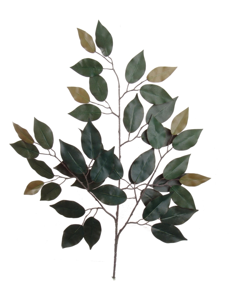 "24"" RED FICUS SPRAY X3     - RED BACK"