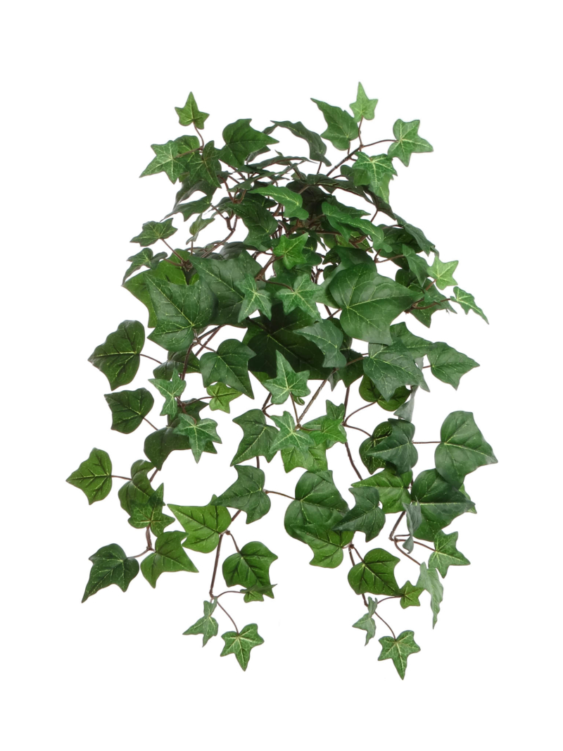 "23"" ENGLISH IVY BUSH/117L - GREEN"