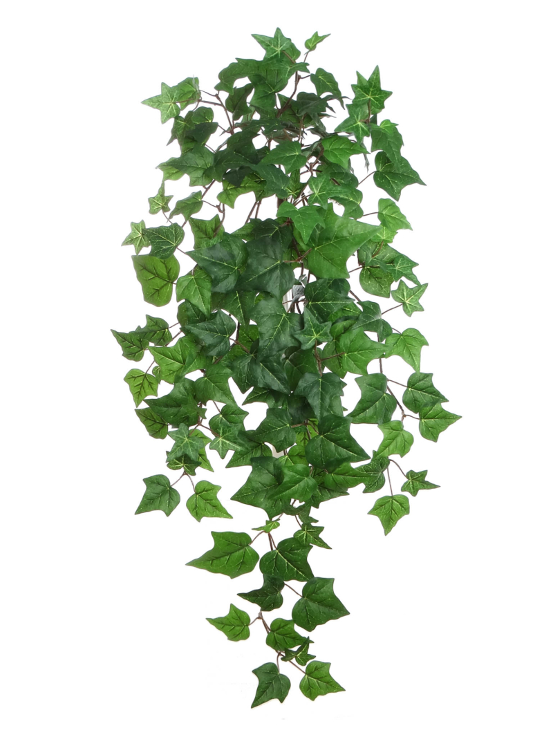 "33"" ENGLISH IVY BUSH/157L - GREEN"