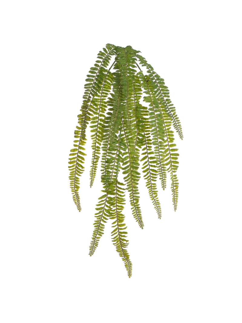 "30"" FERN HANGING BUSH"
