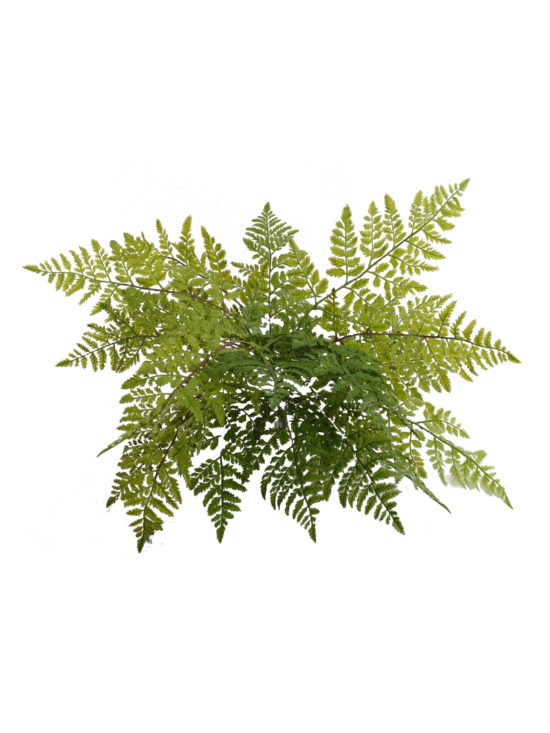 "LEATHER FERN BUSH X7 28"" DIA"