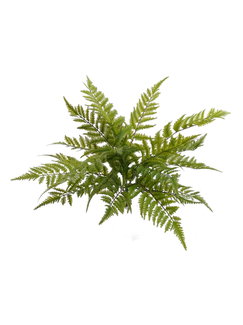 "BOSTON FERN X7 28"" DIA"