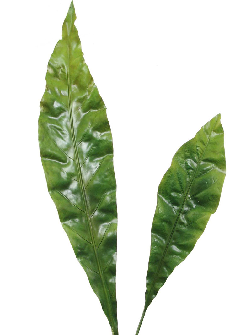 "41"" & 25"" ANTHURIUM LEAF - GREEN"