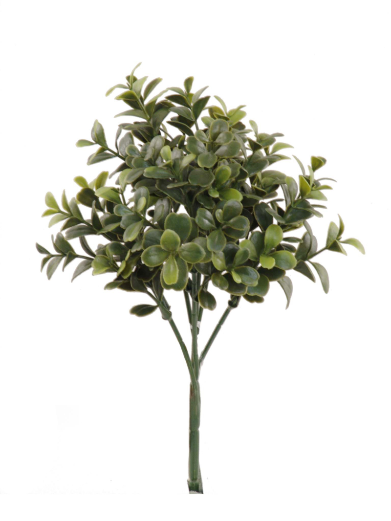 "10"" BOXWOOD PICK W/36 CLUSTERS - GREEN"