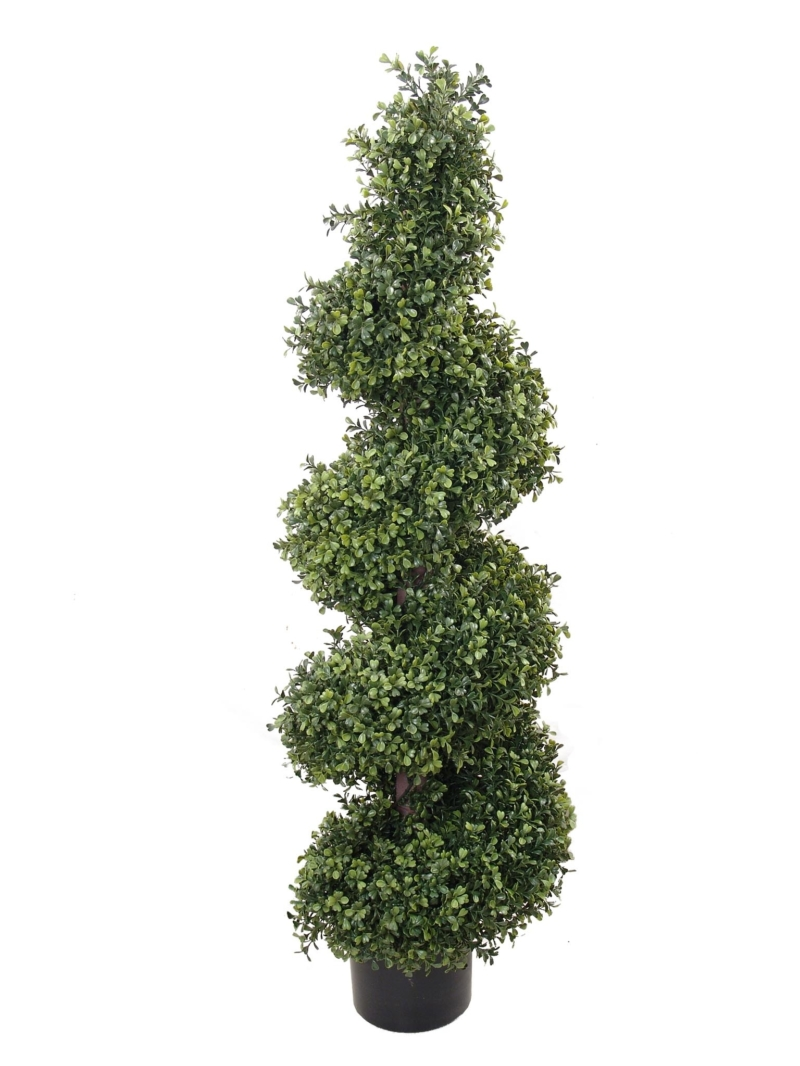 4' BOXWOOD WIDE SPIR TOPI IN POT - NAT-GR