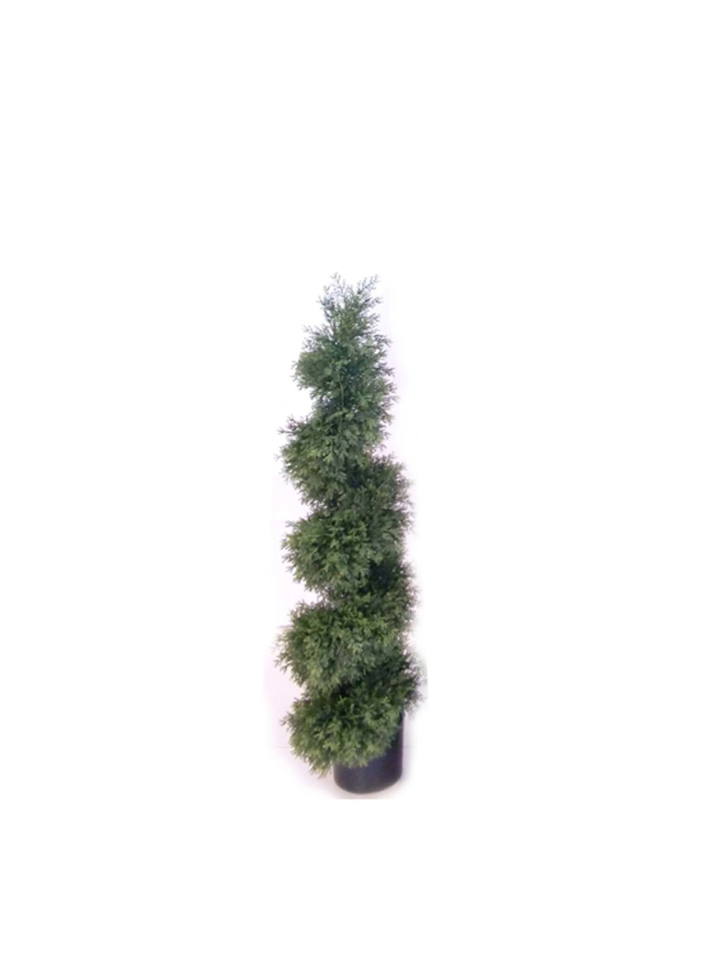 4' CEDAR SPIRAL TOPIARY IN POT - NAT-GR