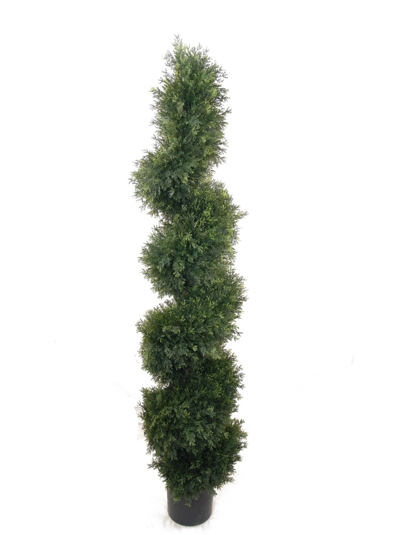 5' CEDAR SPIRAL TOPIARY W/ POT - NAT-GR