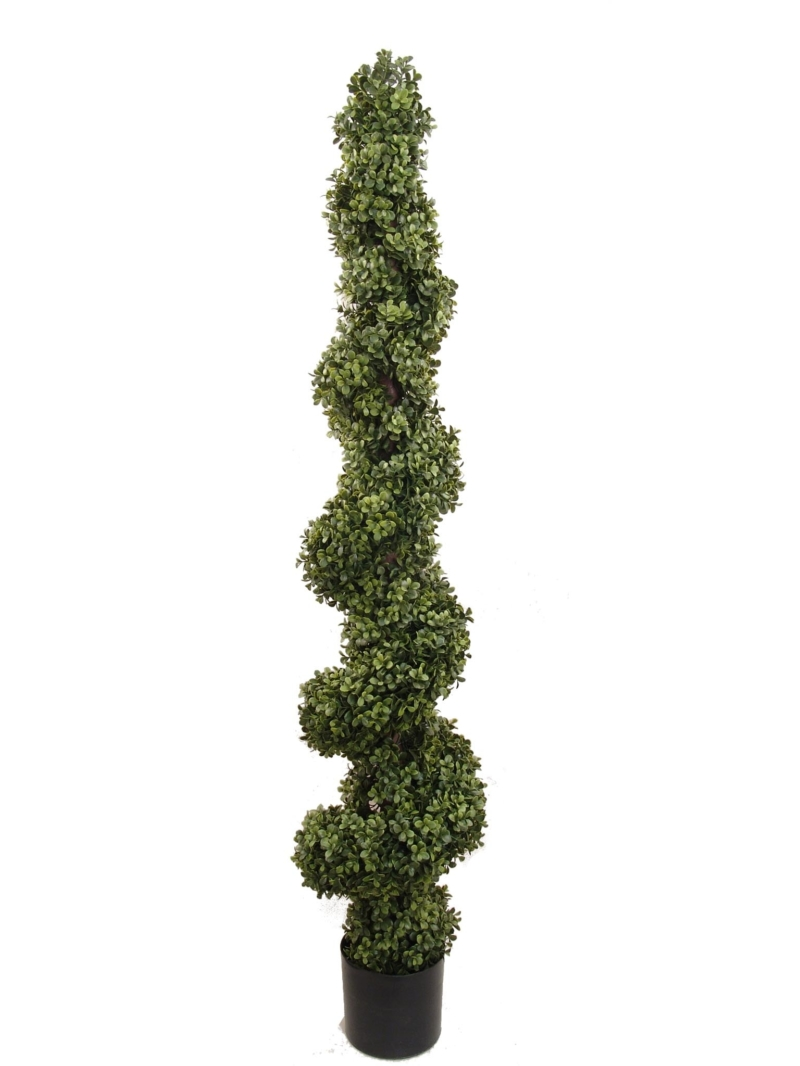 5' BOXWOOD SPIRAL TOPIARY IN POT - GREEN