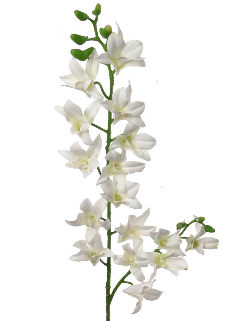 "34"" DENDROBIUM SPRAY"
