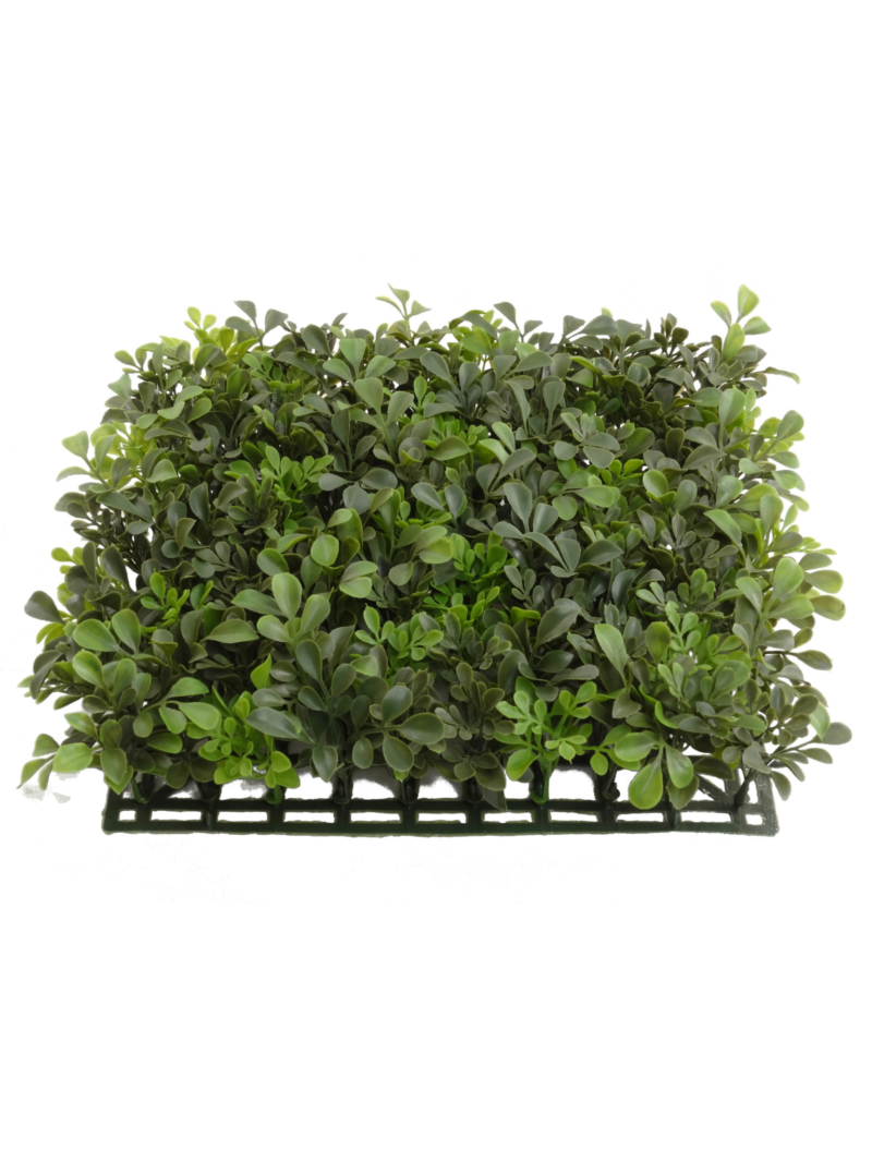 "12"" BOXWOOD SQUARE - GREEN"