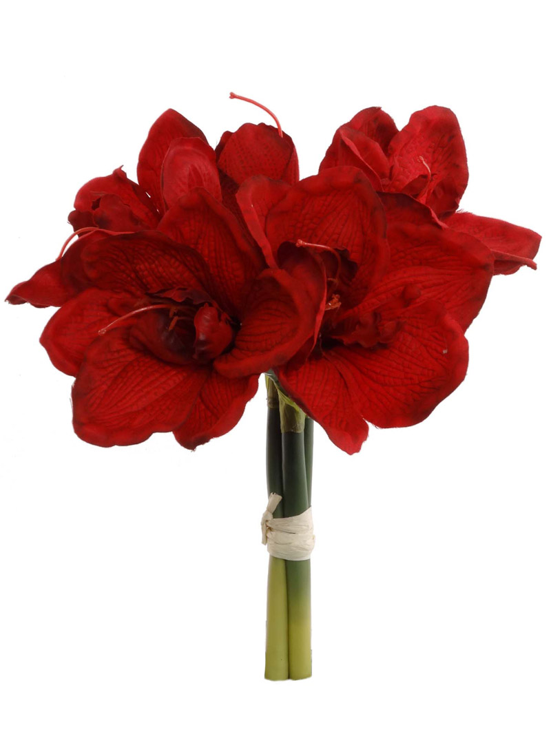 "12.5"" AMARYLLIS BUNDLE"