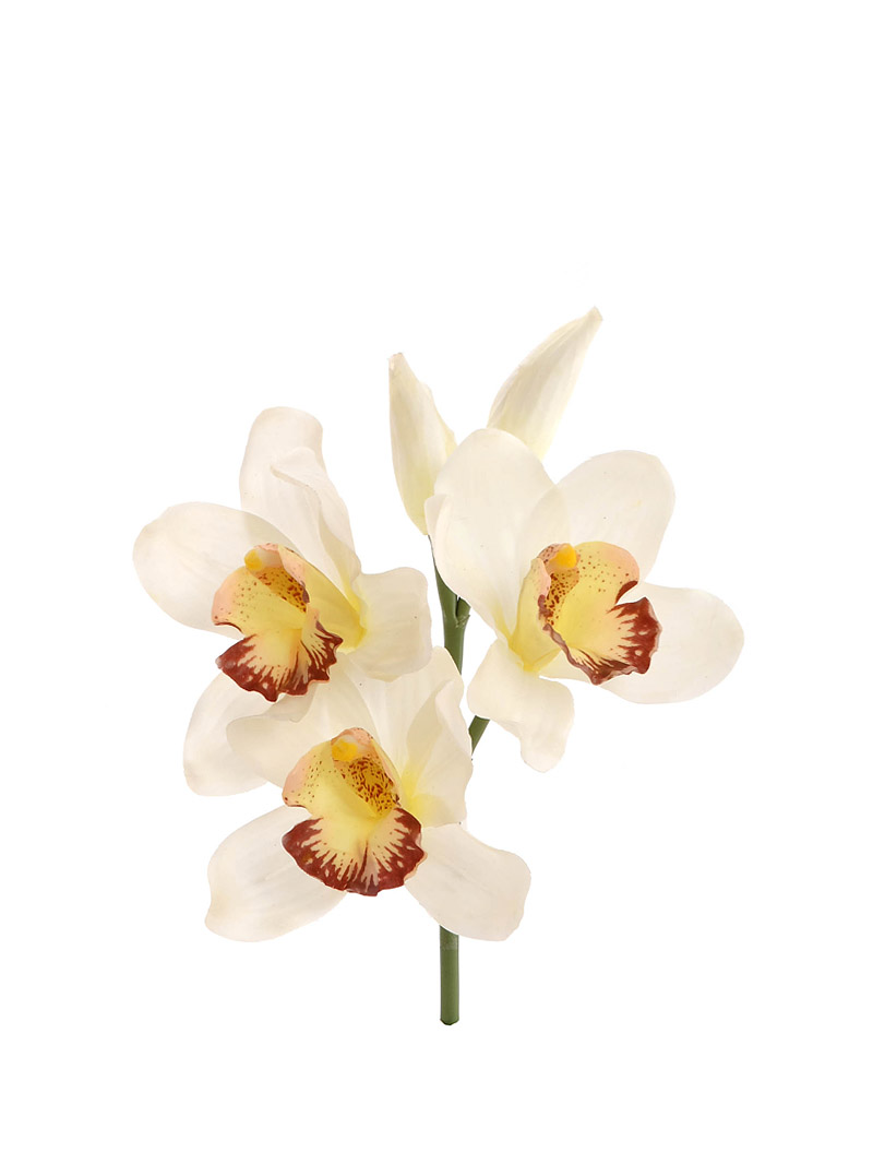 "10"" CYMBIDIUM PICK 3F/2B"