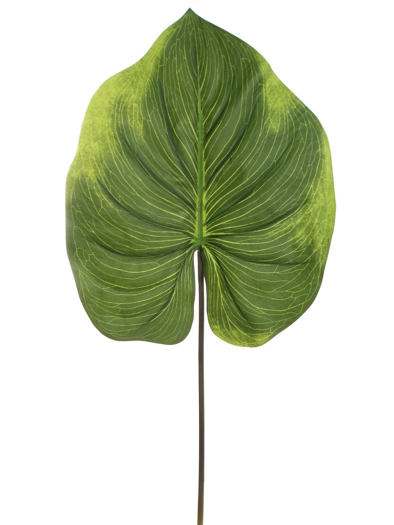 "33"" ALOCASIA LEAF - GREEN"