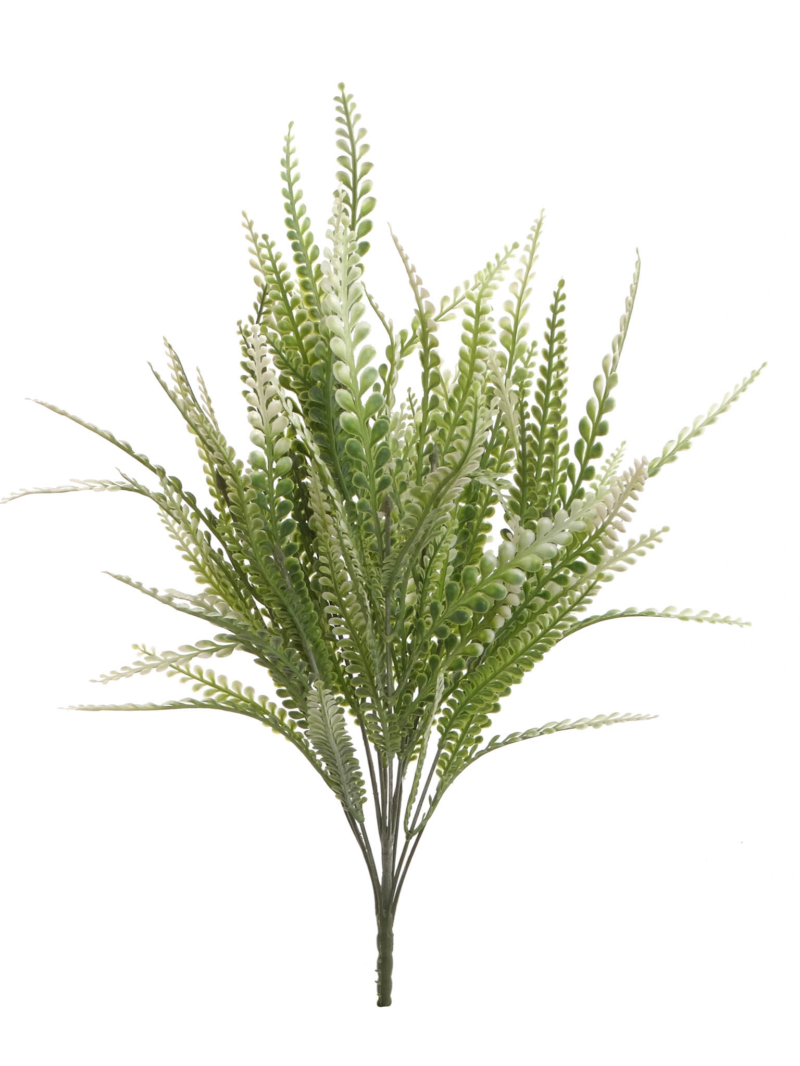 "21"" BUTTON FERN BUSH - GR"