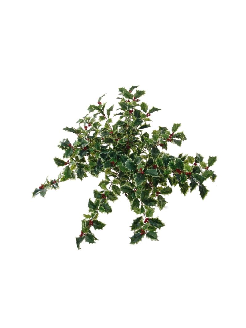 "23"" HOLLY BUSH 525L/56BRY - GR/WH"