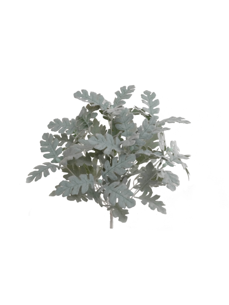 "16""FLCK DUSTY MILLER BUSH X12"