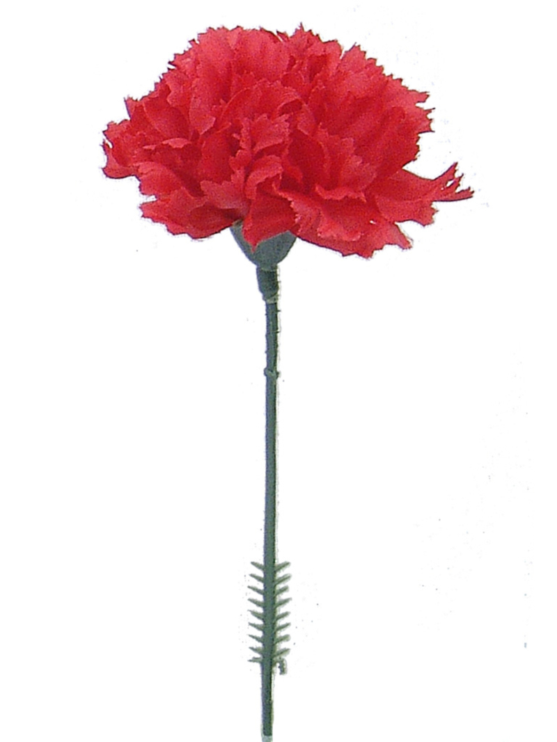 "CARNATION 3.5""DIAM 5""PICK"